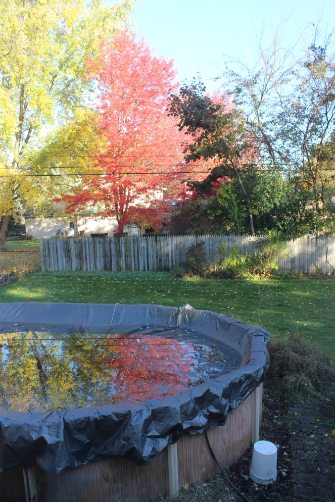 fall trees and pool reflection